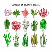 Seaweed set vector illustration. Yellow and brown, red and green aquarium seaweeds biodiversity isolated on white. Sea plants and aquatic marine algae poster