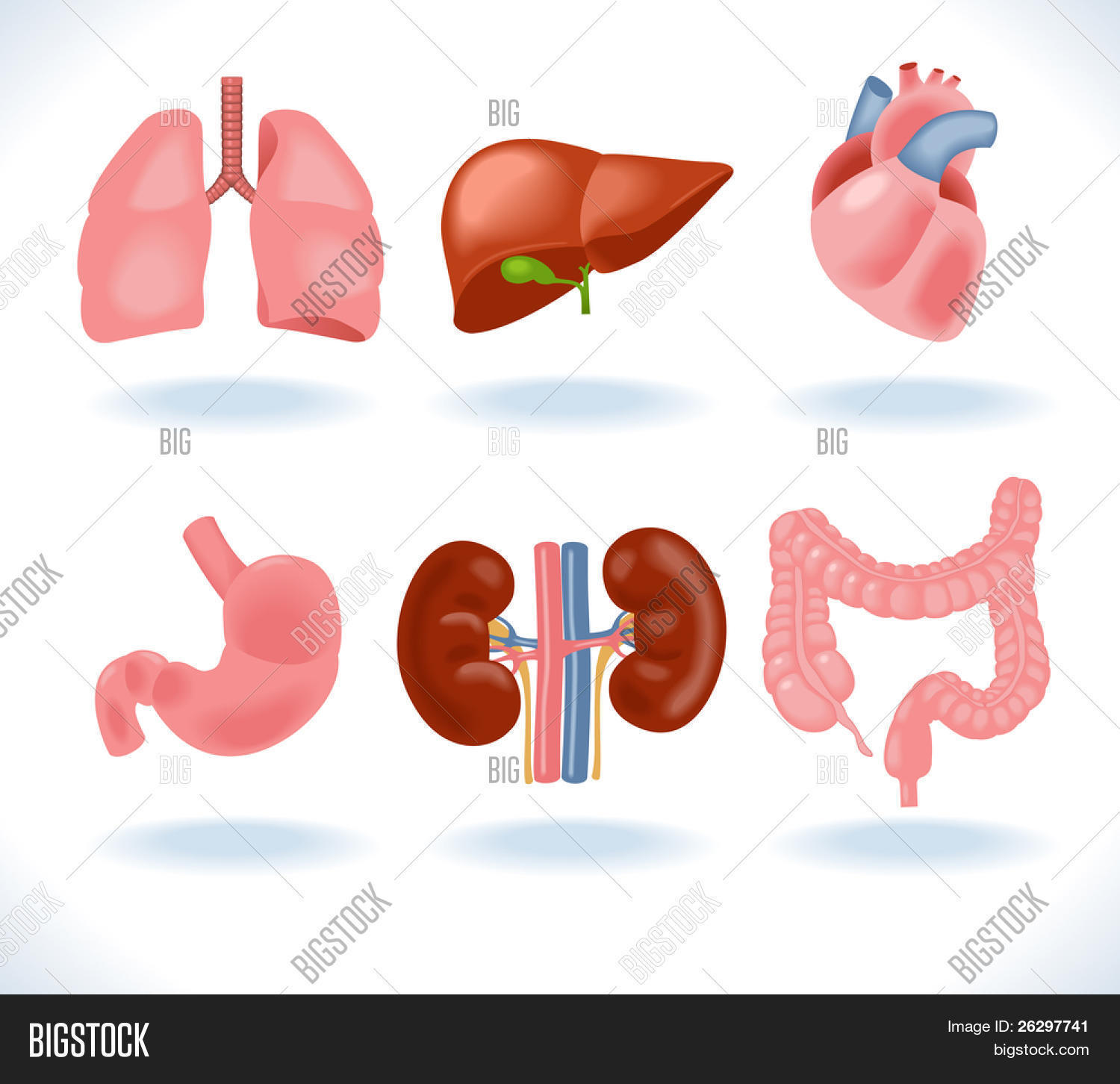 Set Human Anatomy Vector Photo Free Trial Bigstock