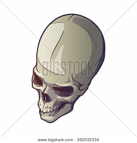 Human Skull Hand Drawing. Top Angle. Linear Drawing Painted In 3 Shades, Isolated On White Backgroun