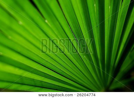 Abstract palm leaf background, shallow depth of field