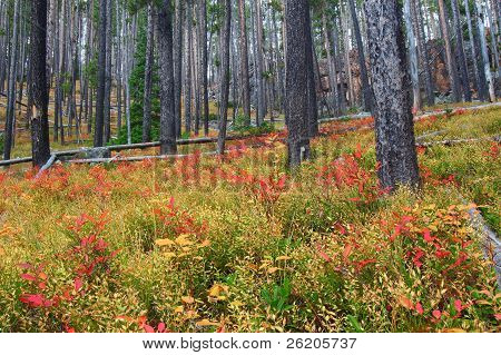 Bright autumn colors in the Lewis and Clark National Forest of central Montana. poster