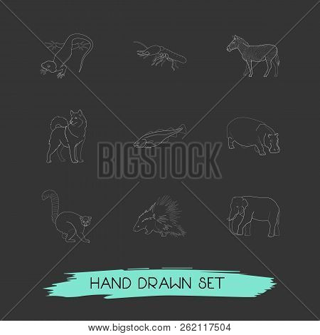 Set Of Zoo Icons Line Style Symbols With Hippo, Dog, Lizard And Other Icons For Your Web Mobile App