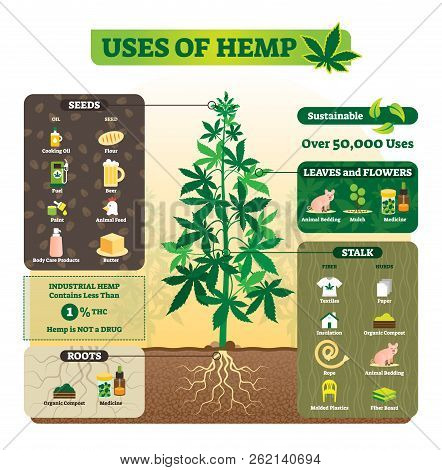 Uses Of Hemp Vector Illustration. Seeds, Leaf, Flower, Root And Stalk Use For Cooking Oil, Butter, F