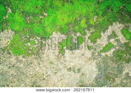 Green Moss Growing On Concrete Floors. Green Moss On The Surface Of A Large Rock.