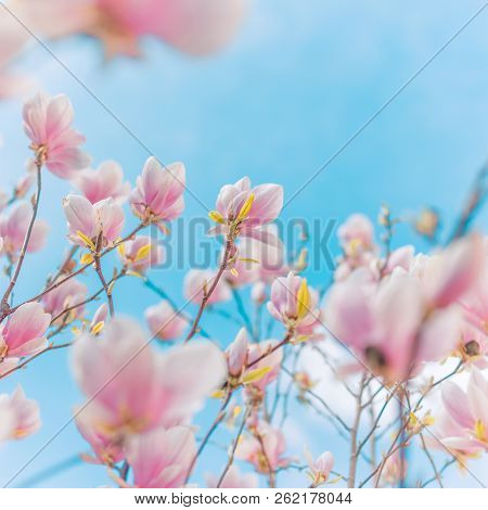 Spring Border Background With Blossom, Close-up. Abstract Floral Spring Background. Blossoms Over Bl