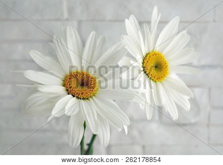 Flowers Camomile On A Background Of White Stone Wall