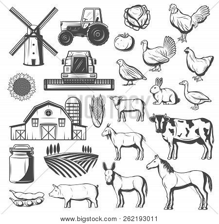Farming, Agriculture And Cattle Icons. Vector Tractor, Windmill Or Grain Barn And Arable Field, Farm