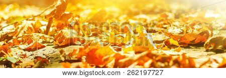 Autumn. Banner. Background Of Autumn Leaves In A Park On Earth, Yellow Leaves In Autumn Park. Autumn