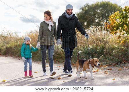 family, pets and people concept - happy mother, father and little daughter walking with beagle dog in autumn