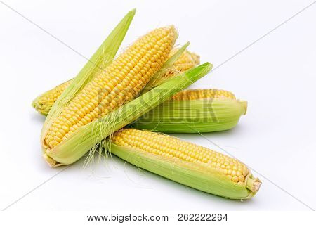 Yellow Corn Cobs Isolated On White Background.