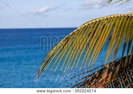 Palm leaves with sky and ocean