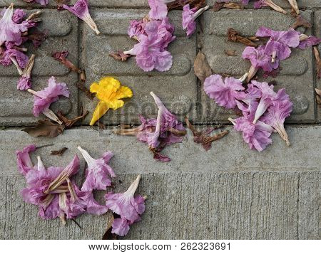 Background Of Flowers Fallen On A Concrete Floor In A Footpath With Contrast Of Yellow And Pink Copy