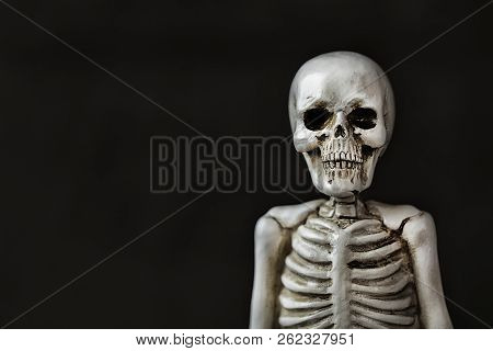 Halloween Ghoul Skeleton Staring At The Audience