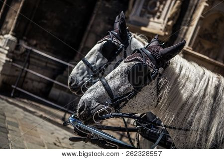 Horses On Historic Europe Center Square, Tourism Monument