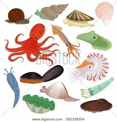Shellfish Vector Marine Animal Octopus Molluscs Tentacle And Animalistic Character Octopi Oyster Sna