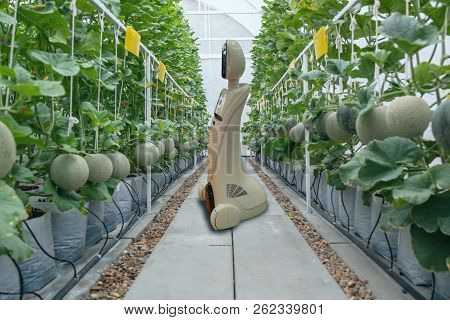 Iot Smart Farming, Agriculture In Industry 4.0 Technology Concept, Trend Robot Using In Farm To Help