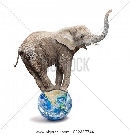 African elephant - Loxodonta africana balancing on a blue planet or globe. Ecology metaphor.