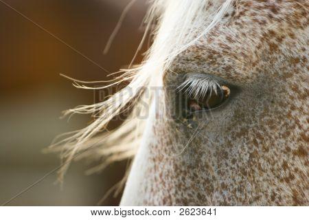 Equine Fringe Profile