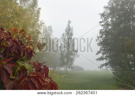 Mystical Autumn Morning In Fog. Landscape With Trees, Fall Colors Leaves And Fog.