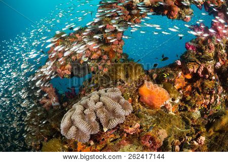 poster of Vibrant coral reef with hundreds of glass fish at the SS Yongala ship wreck, Great Barrier Reef, Australia