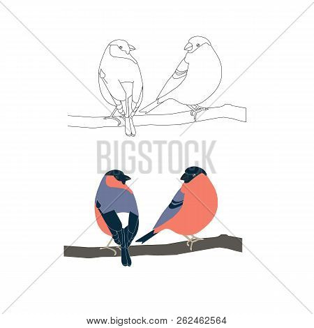 Children Coloring Page Stock Vector Illustration, Monochrome And Coloring Bullfinch For Web, For Pri