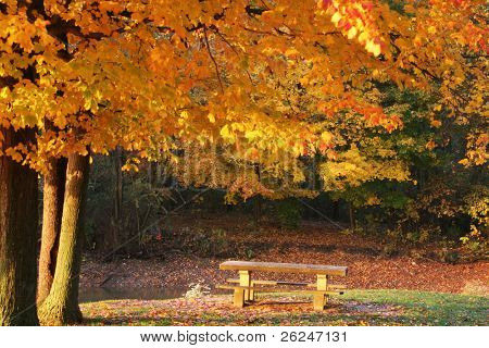 Beautiful sunrise scene in the autumn with golden leaves and a picnic table
