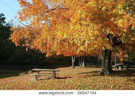 Tranquil park scene in Columbus, Ohio with colorful foliage and a picnic table