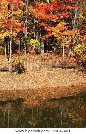 Colorful trees along the lake in the fall