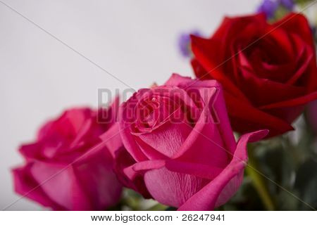 Pink and red roses in the corner with room for copy space