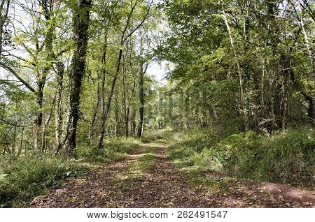 Woodland Trail On Skirrid Fwar, Brecon Beacons, Wales