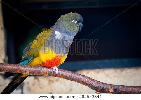 Colourful Parrot Bird Sitting On The Perch.