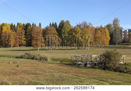 Beautiful, Colorful Trees And Meadows In A Park During The Autumn. Mostly Birches, Rowan
