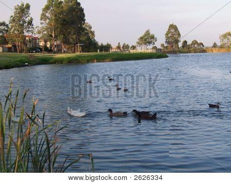 Eagle Vale Creek