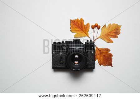 Vintage Retro Camera And Autumn Fall Leaves. Flay Lay, Top View. Nature, Season Photograph And Decor