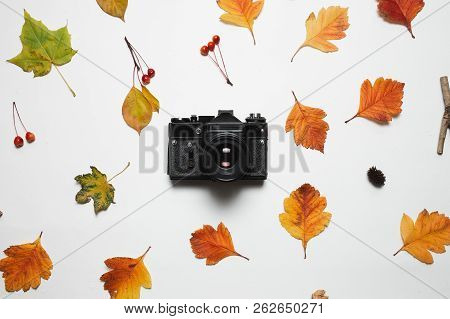 Vintage Retro Camera And Floral Frame Of Autumn Fall Leaves With Red Berries And Maple Leaf. Flay La