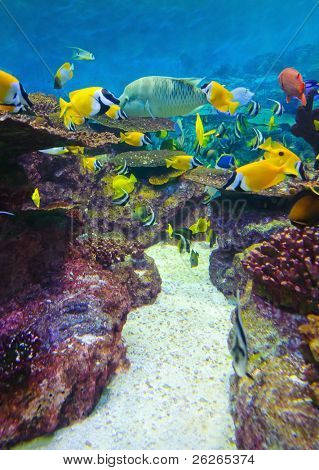 torpical fishes at Seoul Coex Oceanarium