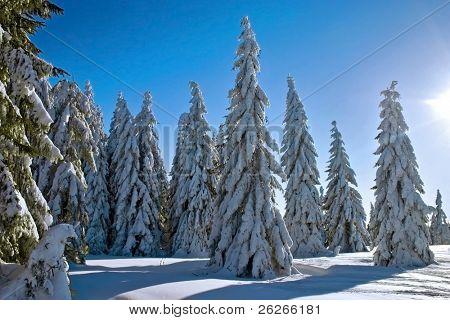 winter landscape with sunbeam