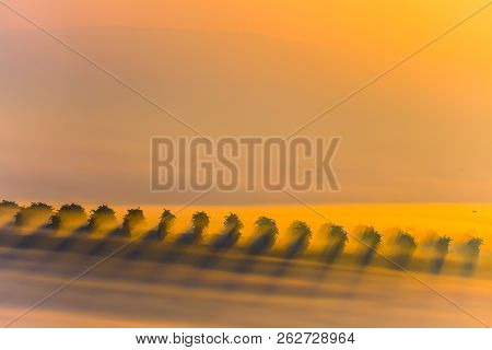 Beautiful Countryside Vineyards Landscape In South Moravia During Amazing Sunrise With Fog. Sun Rays