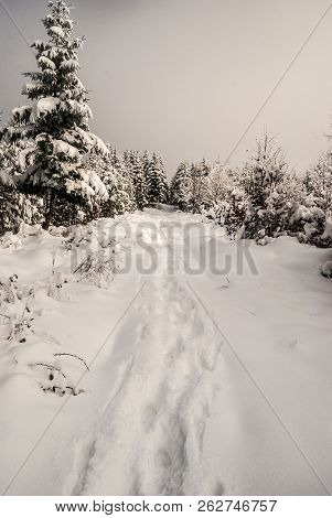 Winter Snow Covered Hiking Trail With Trees Around Near Polomka Hill In Moravskoslezske Beskydy Moun
