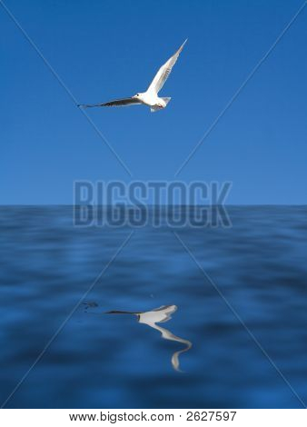 seagull flying over sea peaceful summer vacation image poster