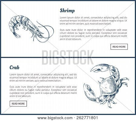 Seafood and crustacean icons vintage illustration. Hand drawn seafood set, decorative icons of shrimp and crab restaurant menu template vector sketch poster