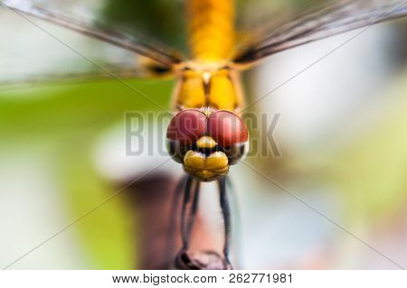 Closeup Of The Head Of A Dragonfly
