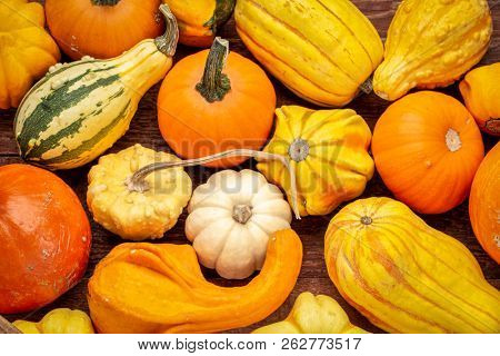 background of colorful winter squash and ornamental gourds on rustic wood