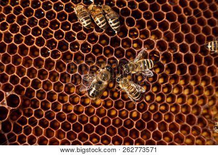 Close Up Honeycomb In Wooden Frame With Bees On It. Apiculture Concept