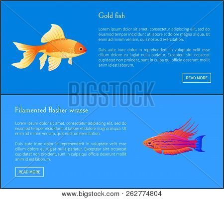 Goldfish And Filamented Flasher Wrasse Posters Set. Fish Of Great Importance. Tropic And Exotic Faun