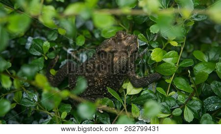 sitting on a concrete green frog close-up. Tropical fauna poster