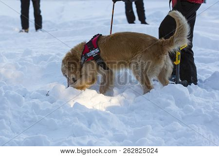 Rescue Dog And A Volunteer From Mountain Rescue Service Participate In A Training For Finding People