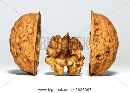 Walnut Between Shells