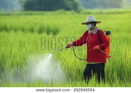 Pesticides Is Harmful To Health