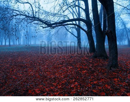 Autumn colorful November foggy landscape. Deserted autumn park with bare autumn trees and dry fallen red autumn leaves, mysterious autumn nature scene